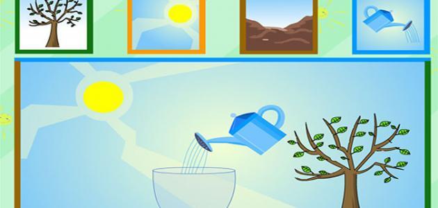 مراحل نمو النبات للأطفال