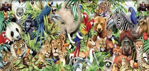 حيوانات آكلات اللحوم والأعشاب للأطفال