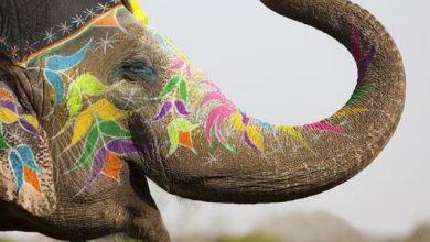 قصة سورة الفيل للأطفال