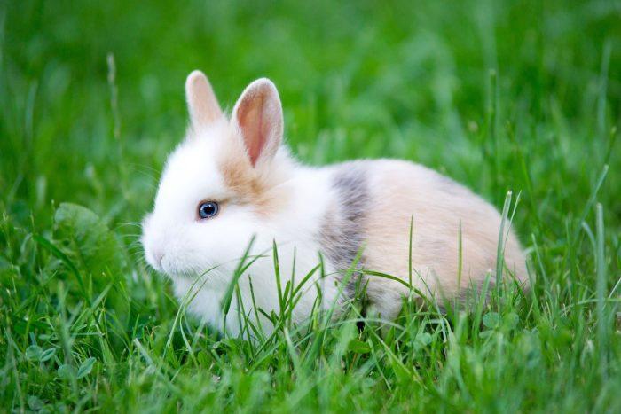 معلومات عن الأرنب للأطفال
