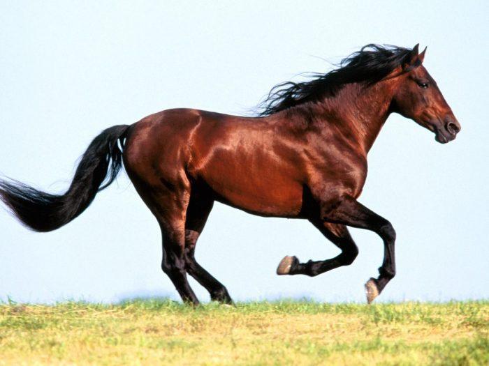 معلومات عن الحصان للأطفال وأسماؤها وألوانها شقاوة