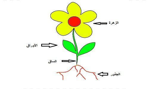 نشاط عن النباتات للأطفال