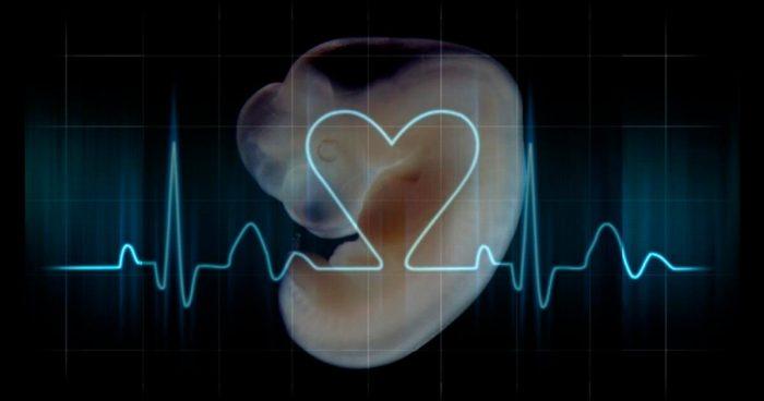 توقف نبض الجنين ورجوعه في الشهر الثالث