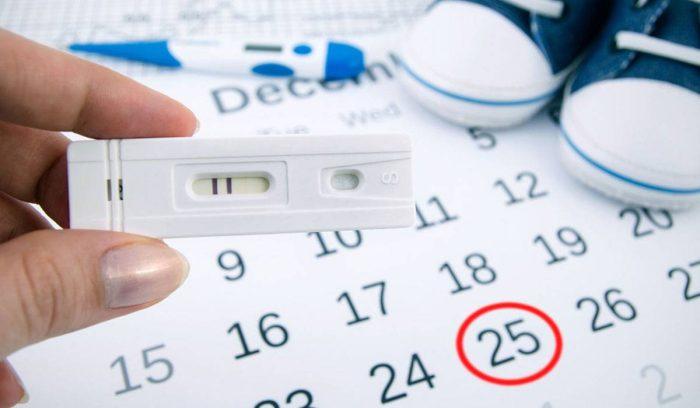 جدول أيام التبويض التي يحدث فيها الحمل